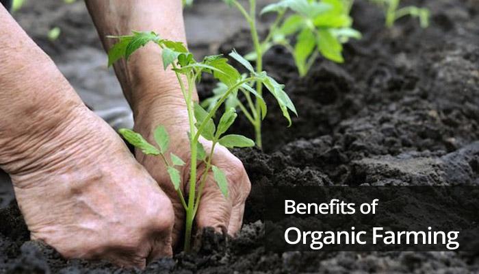 oraganic-farming